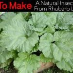 How To Make A Natural Insecticide From Rhubarb Leaves