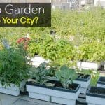 Rooftop Garden: Are They Coming To Your City?