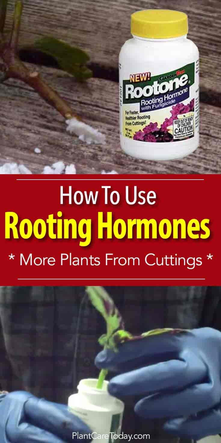 Rootone Rooting hormone cuttings start faster, healthier roots helps prevent