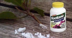 bottle of Rootone rooting hormone powder
