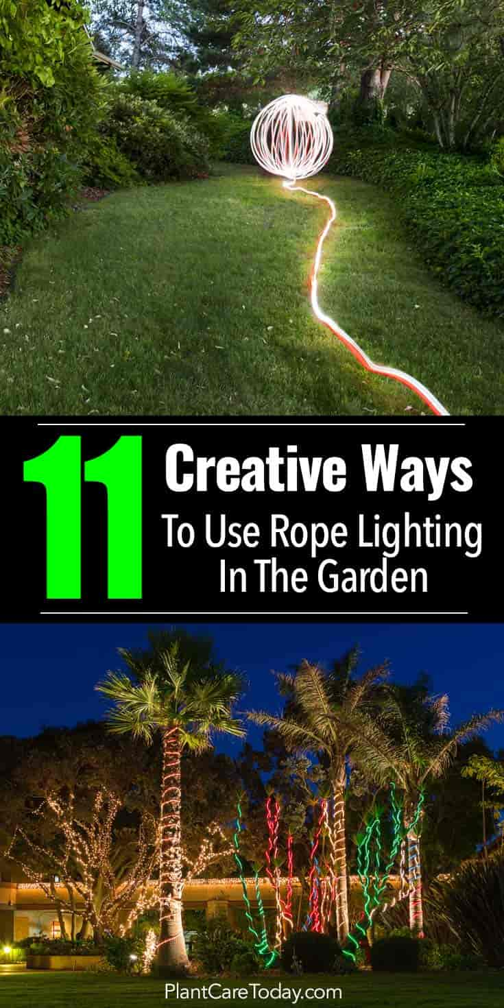 rope lighting wrapped about palm trees for decorating the garden