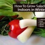 How To Grow Salads Indoors in Winter