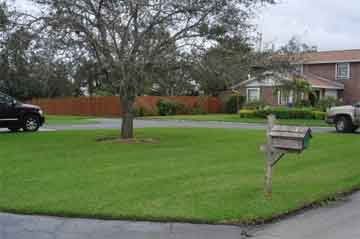 Sapphire St Augustine grass by Sod Solution
