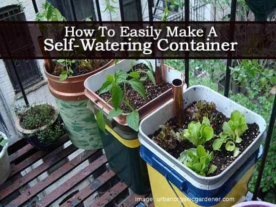 How To Easily Make A Self Watering Container Planter