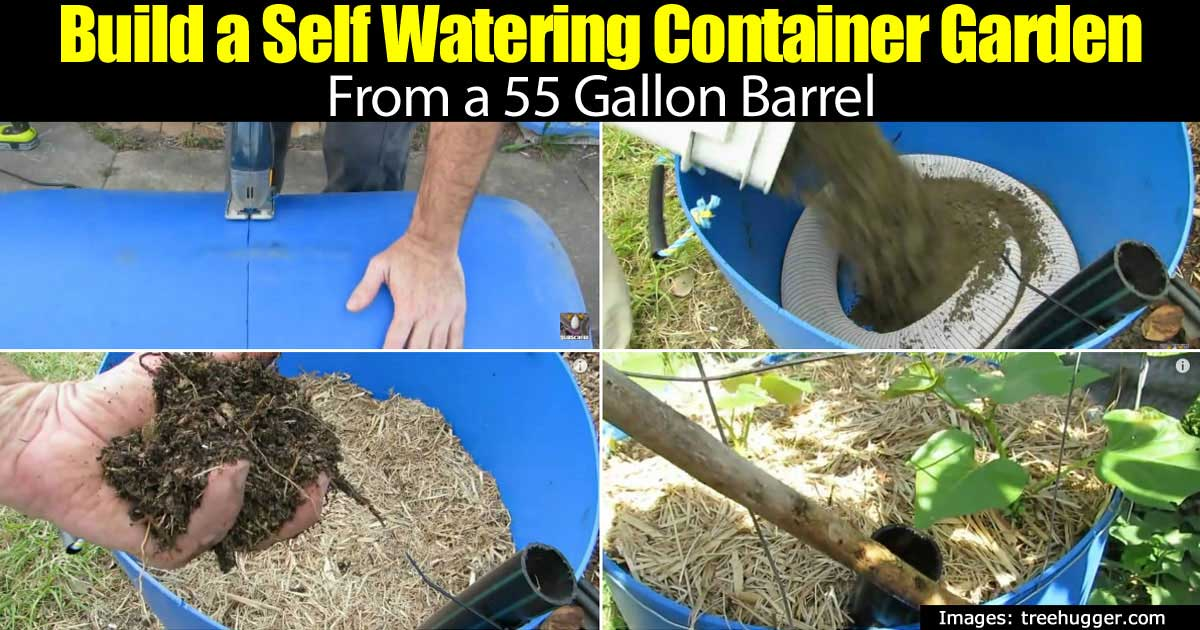 How To Build A 55 Gallon Barrel Self Watering Container Garden