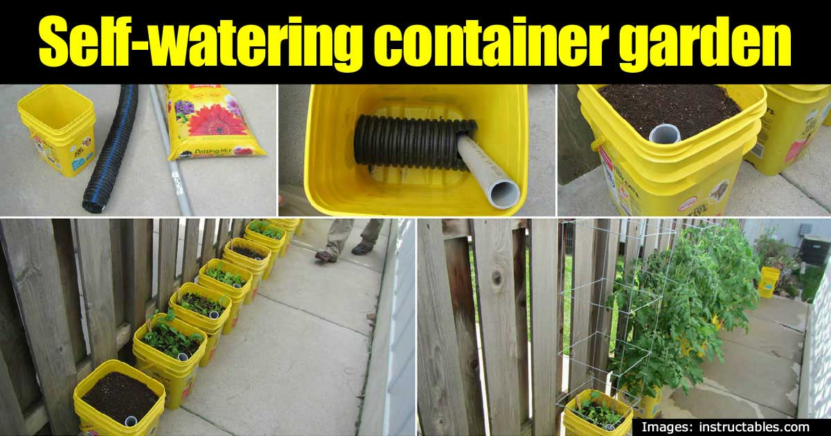 self-watering-container-43020151374
