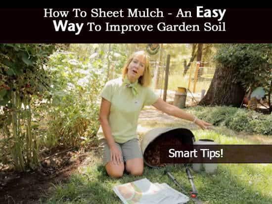 sheet-mulch-2-081613