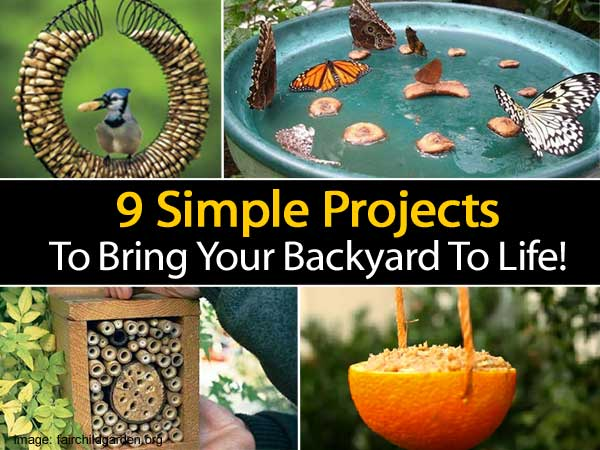 simple-projects-bring-backyard-to-life
