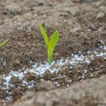 Slow Release Fertilizer: How To Use Them In The Garden