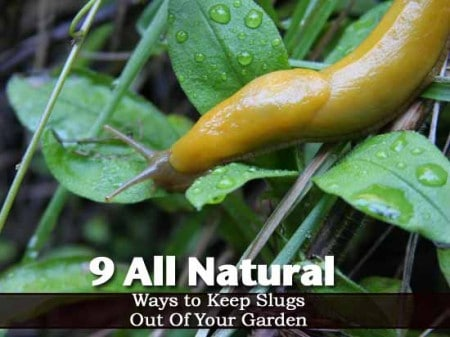 Natural Ways To Keep Slugs Out Of The Garden Latinas Sexy Pics