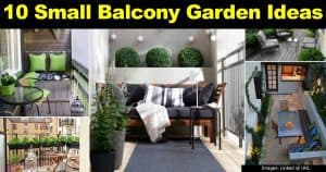 Small balcony with plants