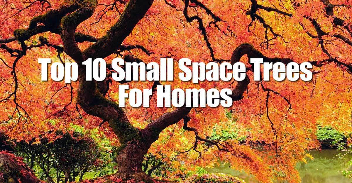 Top 10 small space trees for homes for Top 10 trees for small gardens
