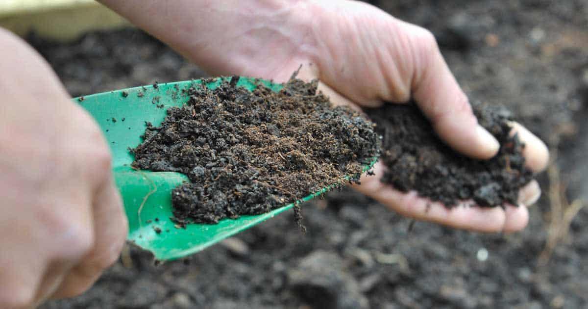 Organic soil amendments organic components to improve for Soil amendments