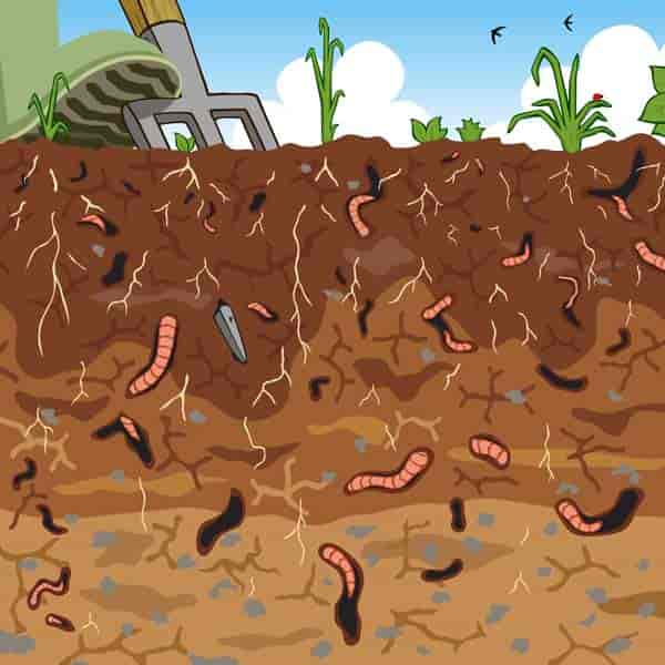 cross section of fertile soil with earthworms