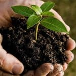 What Are Soil Mites – Friend or Foe?