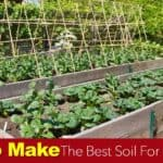 Soil For Raised Beds: How To Make The Best Raised Bed Soil