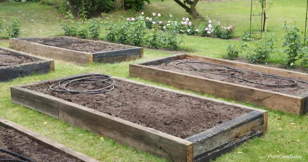 soil in raised garden beds preparing for planting