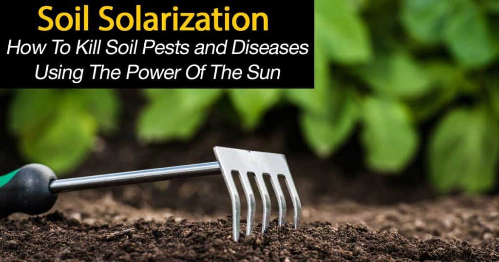 killing pests with soil solarization