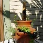 Solar Powered Fountain Herb garden