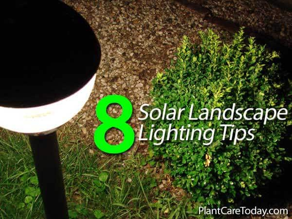 8 Solar Landscape Lighting Tips
