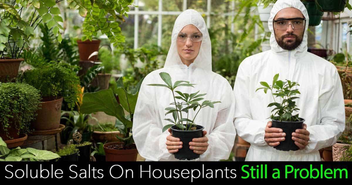 soluble-salts-houseplants-07312016