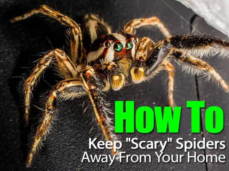 spiders-away-from-home-063014