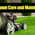 Spring Lawn Care: How To Tips For A Great Looking Yard