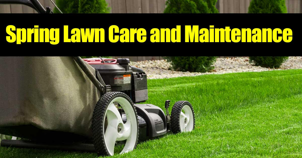 spring lawn care begins with fertilizing and mowing the grass