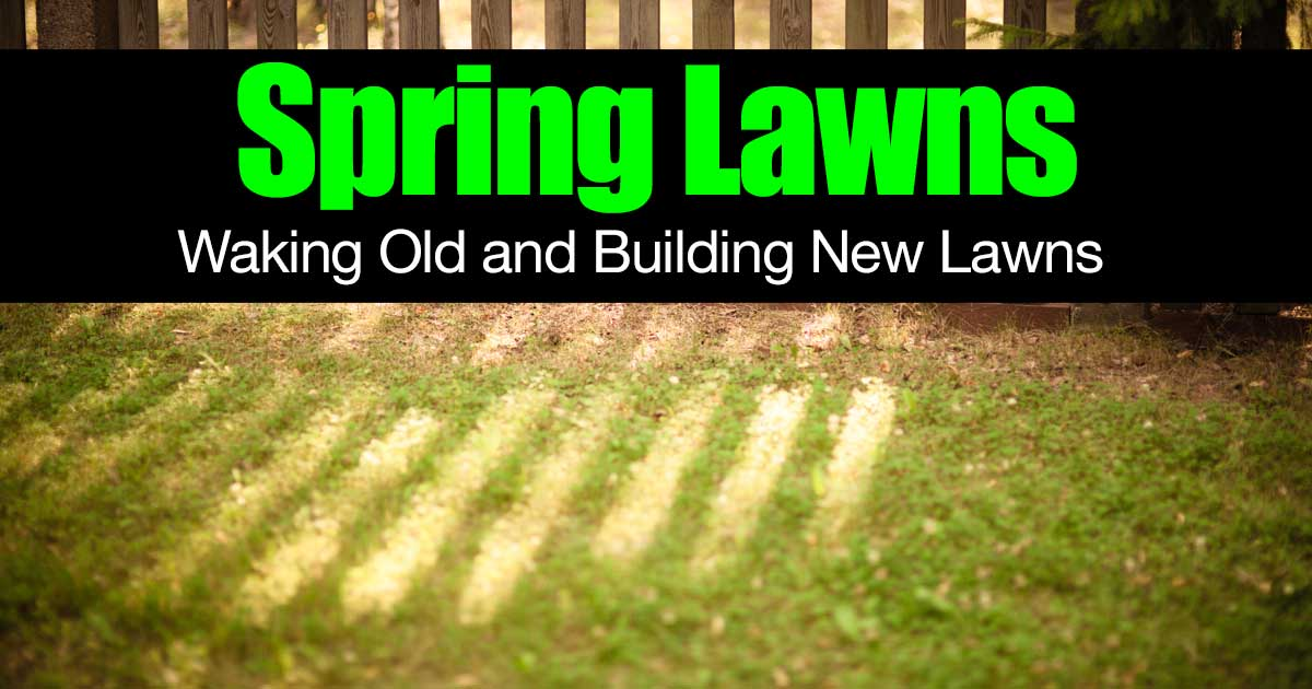 spring-lawns-waking-old-01312016