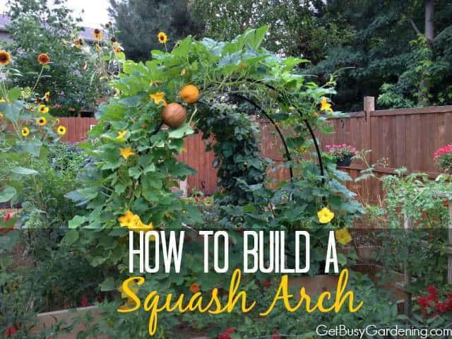 How To Make An Easy Inexpensive Diy Squash Arch