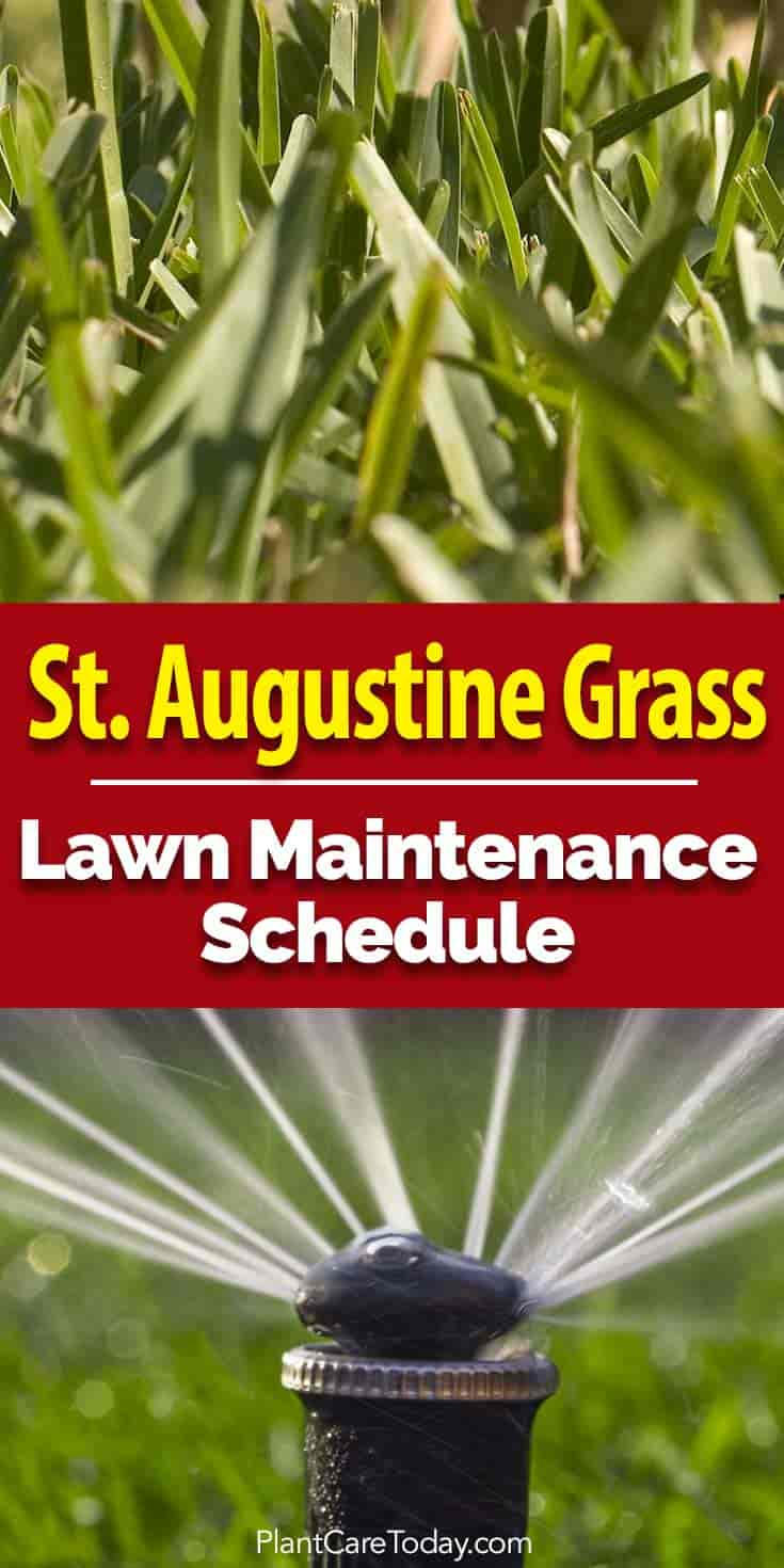 St Augustine grass up close and irrigation sprinkler