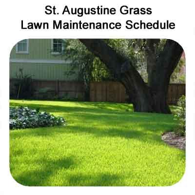 St Augustine Grass Lawn Maintenance Schedule