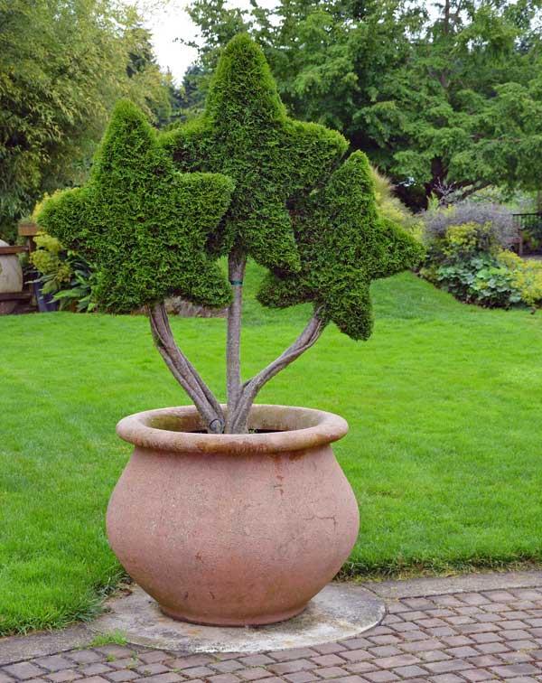 star-topiary-11302015