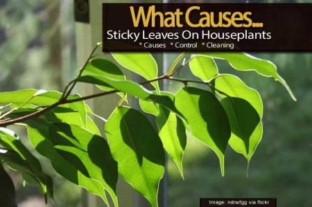 sticky-leaves-112813