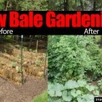 "Straw Bale Gardening: 10 ""Easy Growing"" Reasons To Try It"