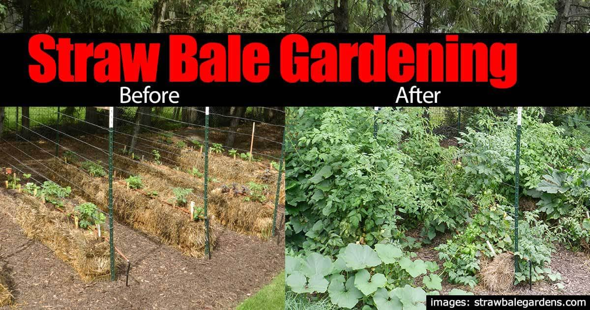 straw bale gardening before after