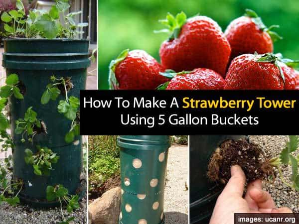 How To Make A Strawberry Tower Using 5 Gallon Buckets