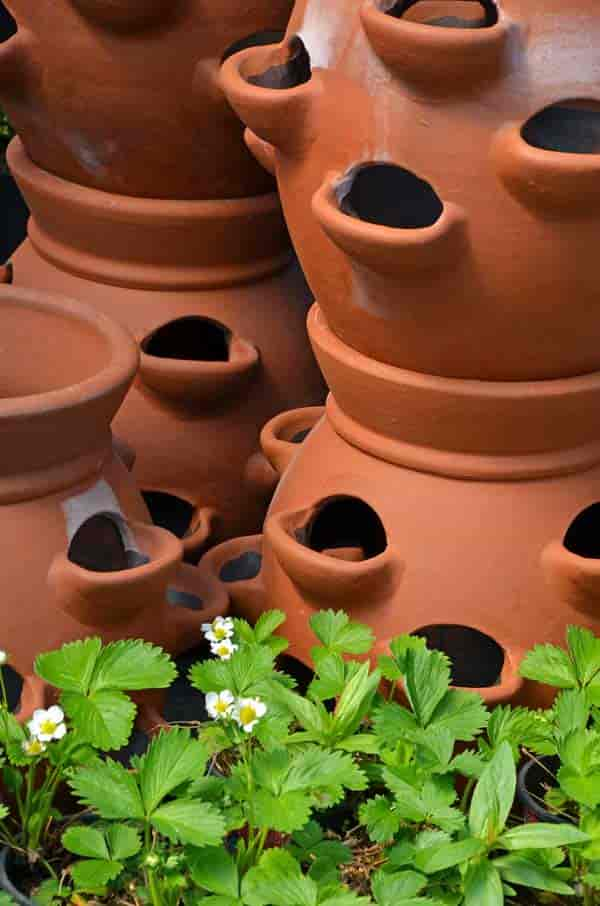 clay or terra-cotta strawberry jars ready for planting