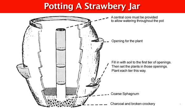 cutout of a Strawberry Jar