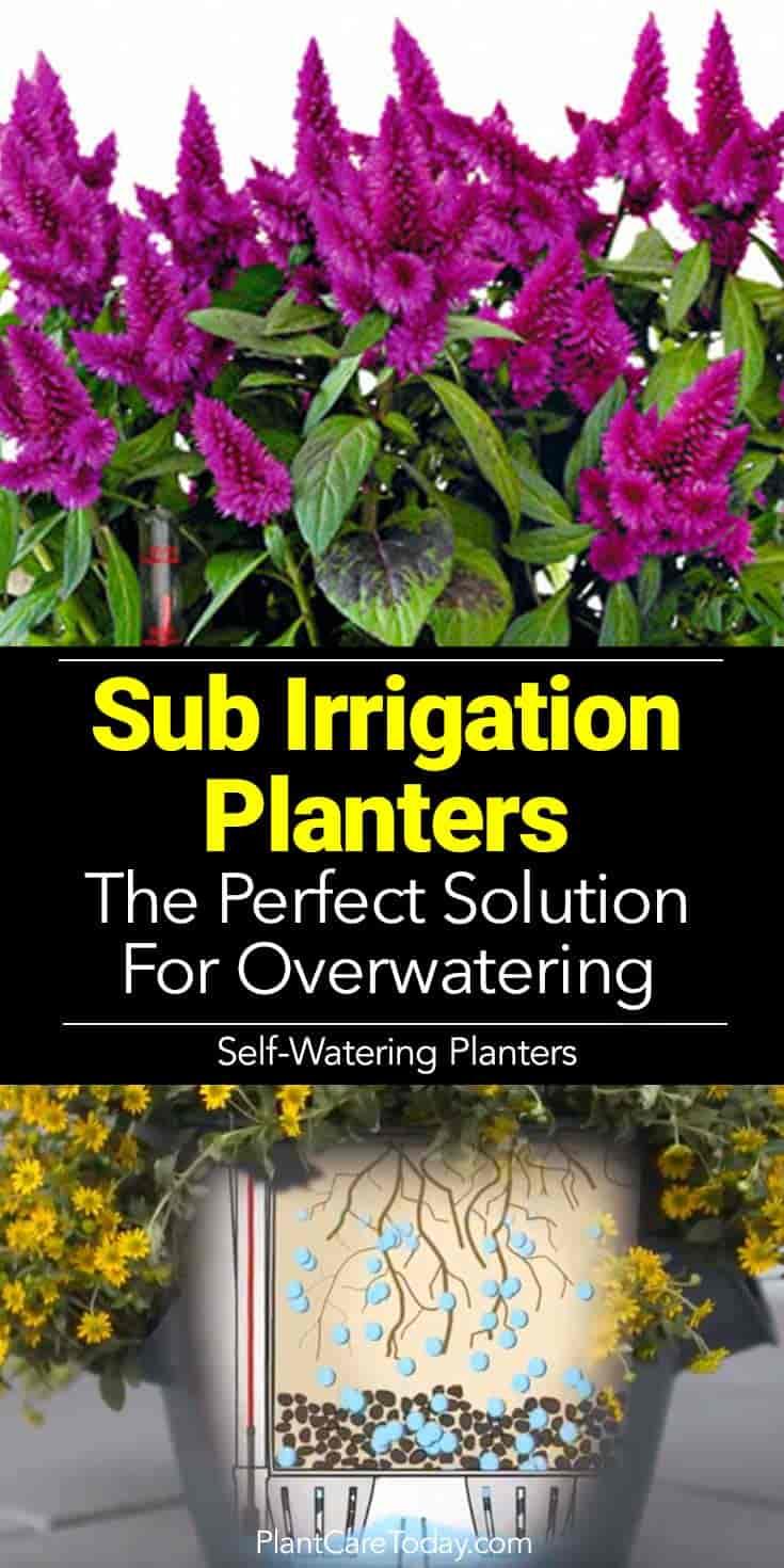 how sub irrigation planters work