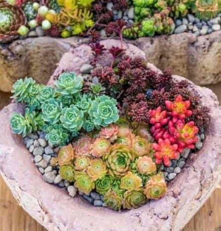 Succulent plants growing in outdoor garden