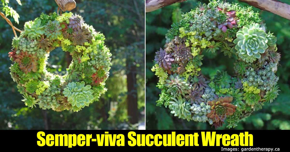 succulent-wreath-63020151545