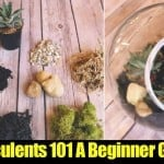 Growing Succulents 101 – A Guide For Beginners