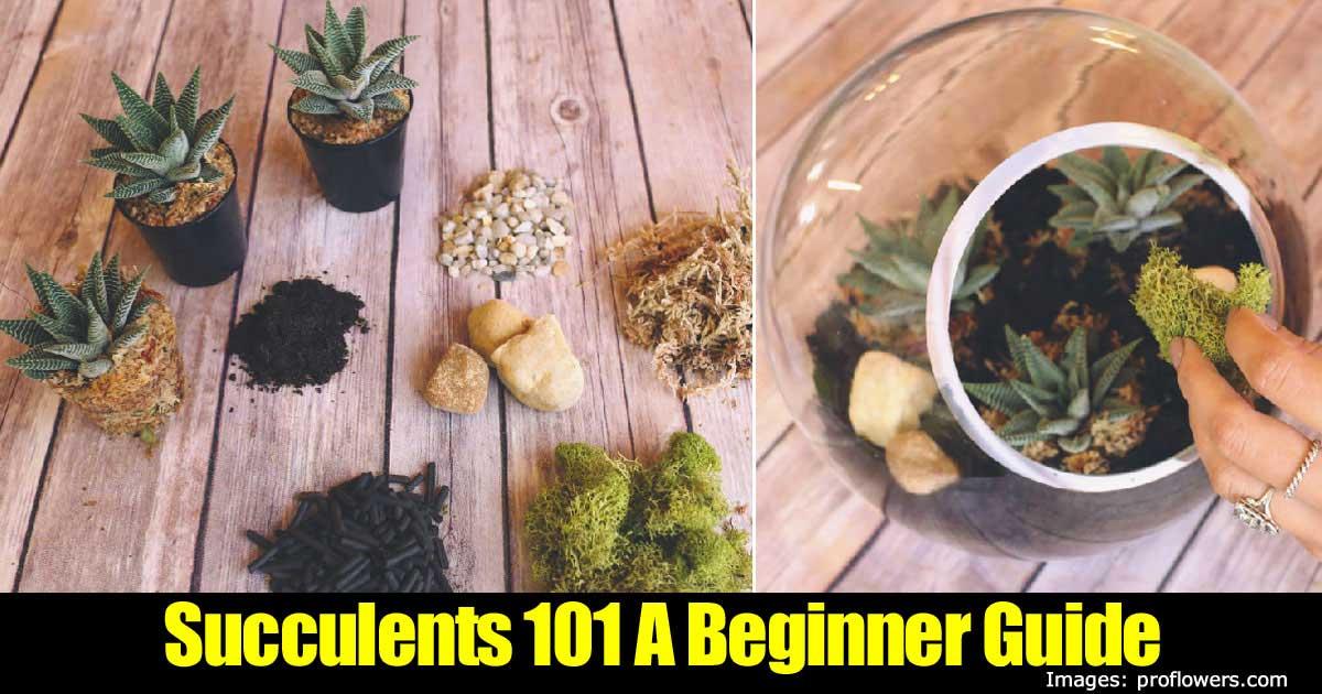 succulents-101-beginner-guide-43020151383