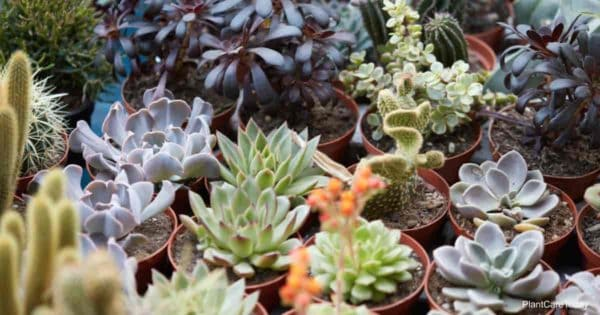 Assorted variety of succulent plants