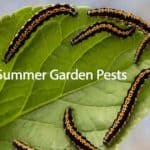 What Are The Most Active Summer Garden Pests?