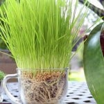 Reduce Plant Watering & Dry Spots, Make Super Growing Potting Soil – Learn How