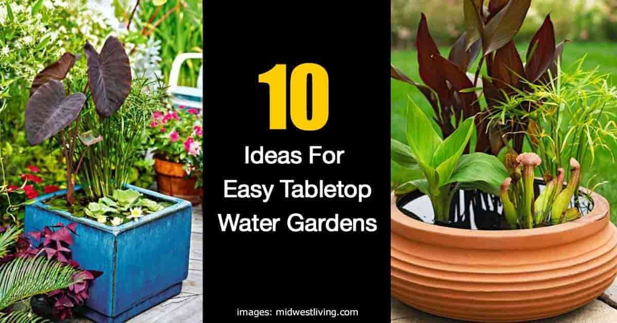 How To Make A Container Water Garden For Your Deck -