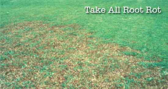 take all root rot