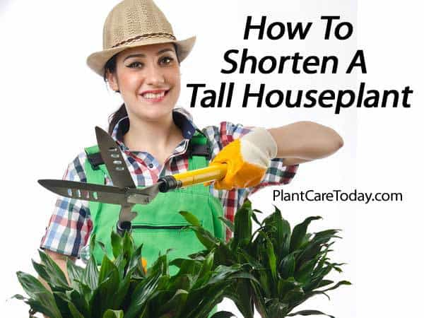tall house plants